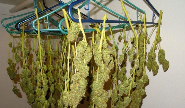Sechage de la weed